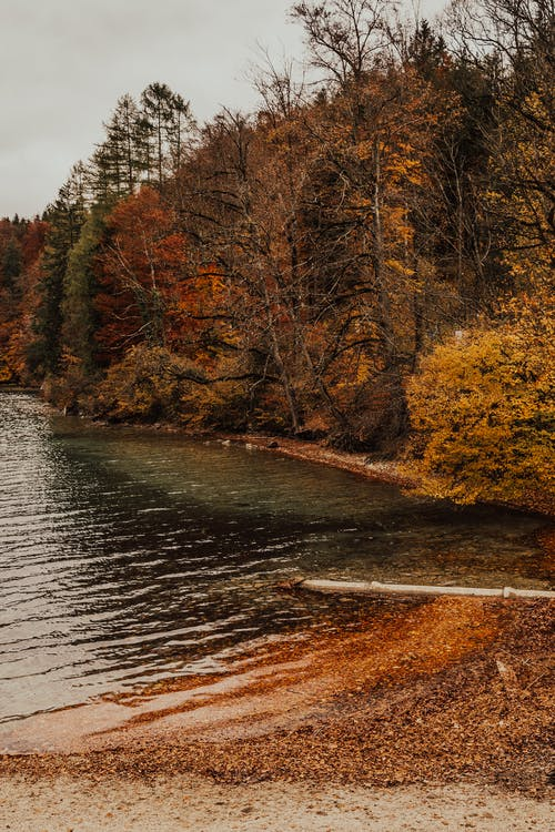 Brown Trees Beside River Under Blue Sky