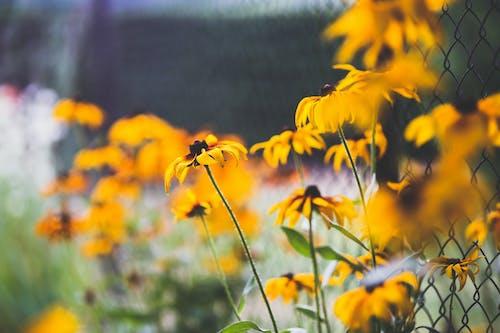 Foto d'estoc gratuïta de flors, jardí, practicar esgrima