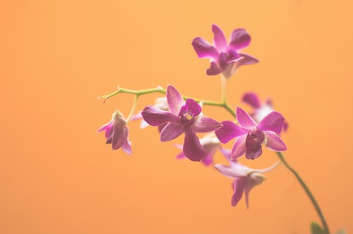 Immagine gratuita di arancia, arancione, bocciolo, fiori