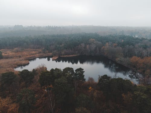 Drone view of dark peaceful lake surrounded with dry grass on field near forest with green and orange foliage under gray sky in nature in fall in foggy day
