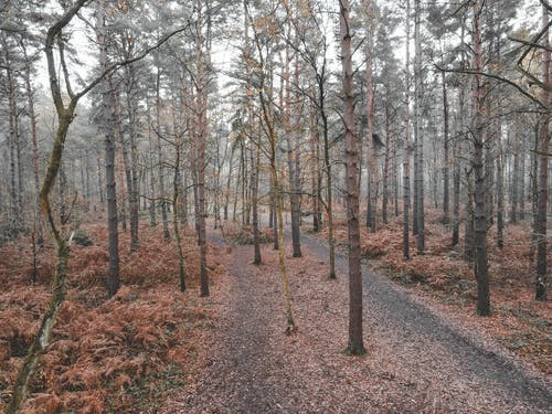 Forest with fallen leaves on pathway in fall