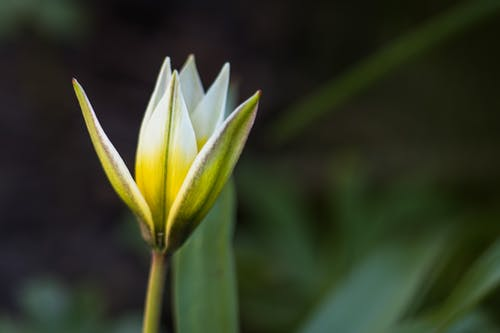 Blossoming flower with tender petals and thick stem growing in sunlight on blurred green background