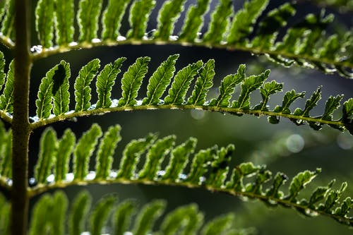 Tropical green plant with thin stalks and wavy foliage growing in sunlight on blurred background