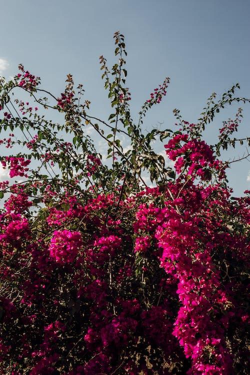 Kostenloses Stock Foto zu angiospermen, aroma, bewölkt