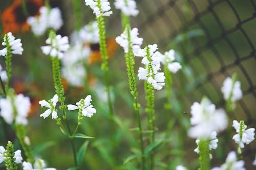 Δωρεάν στοκ φωτογραφιών με εργοστάσιο, καλοκαίρι, κήπος, λουλούδια