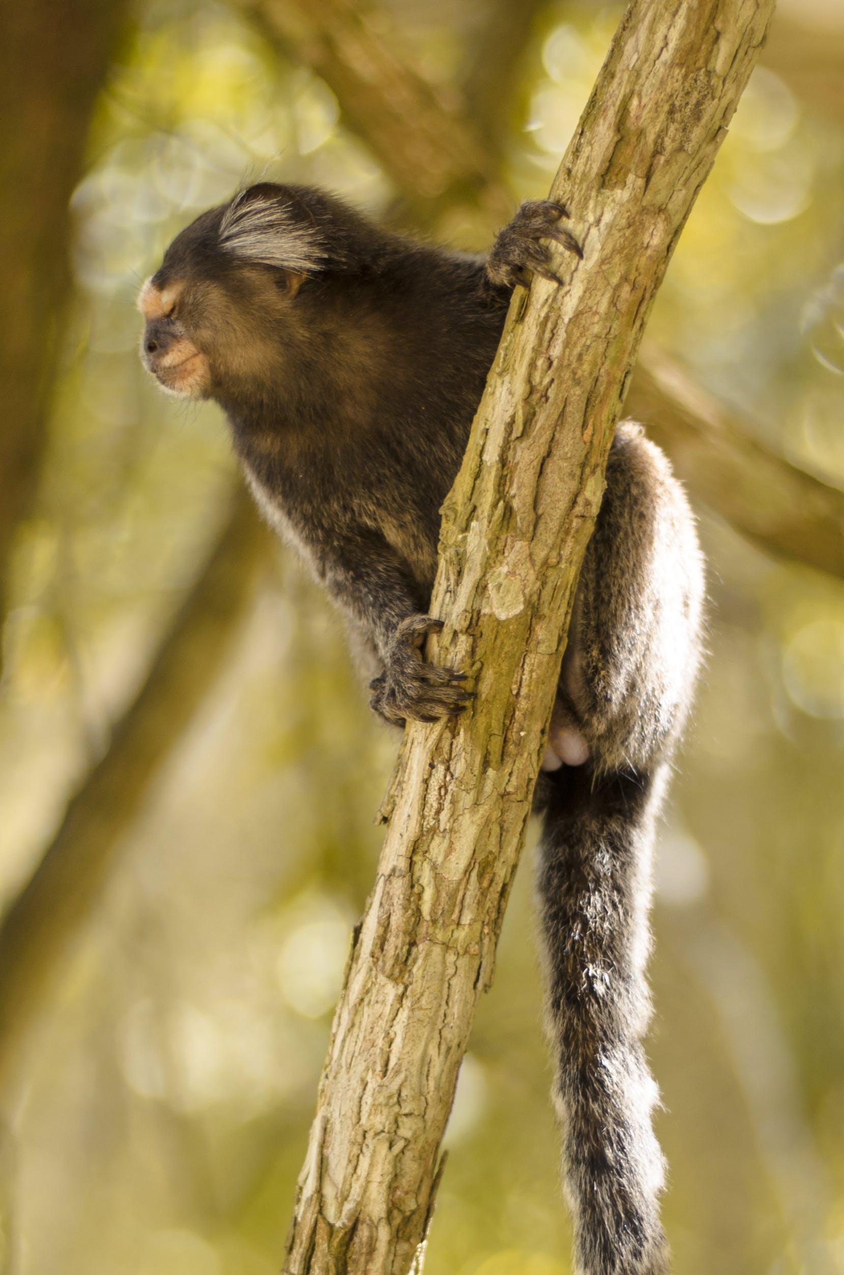 Free stock photo of animal, monkey, brazil, botanical garden