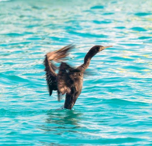 Darmowe zdjęcie z galerii z morze