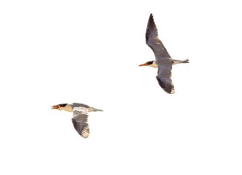 Immagine gratuita di fotografia di animali, fotografia di uccelli, photoshop