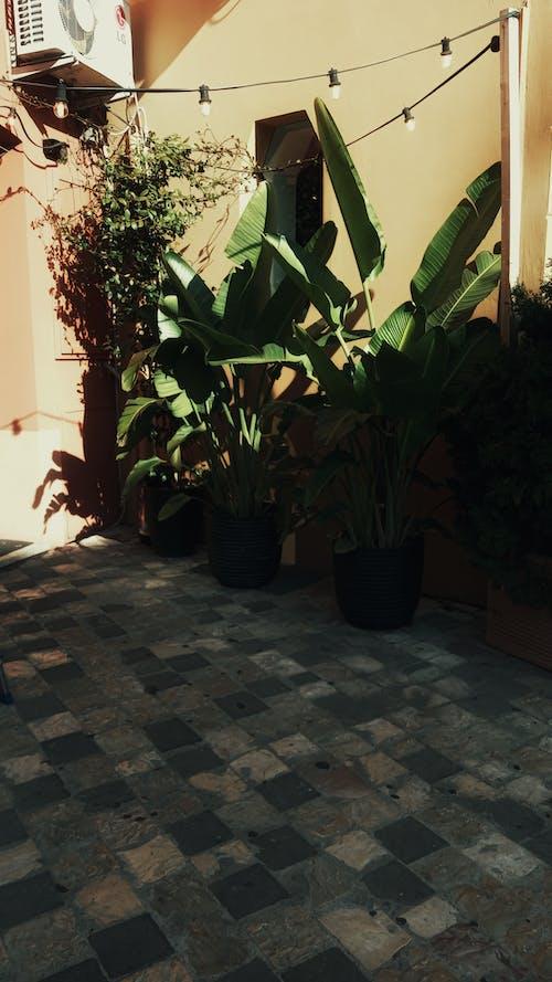 Бесплатное стоковое фото с архитектура, дизайн интерьера, дневной свет, дом