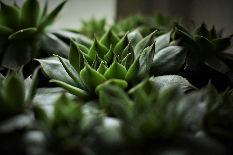 Free stock photo of cacti, cactus, calming, contrast