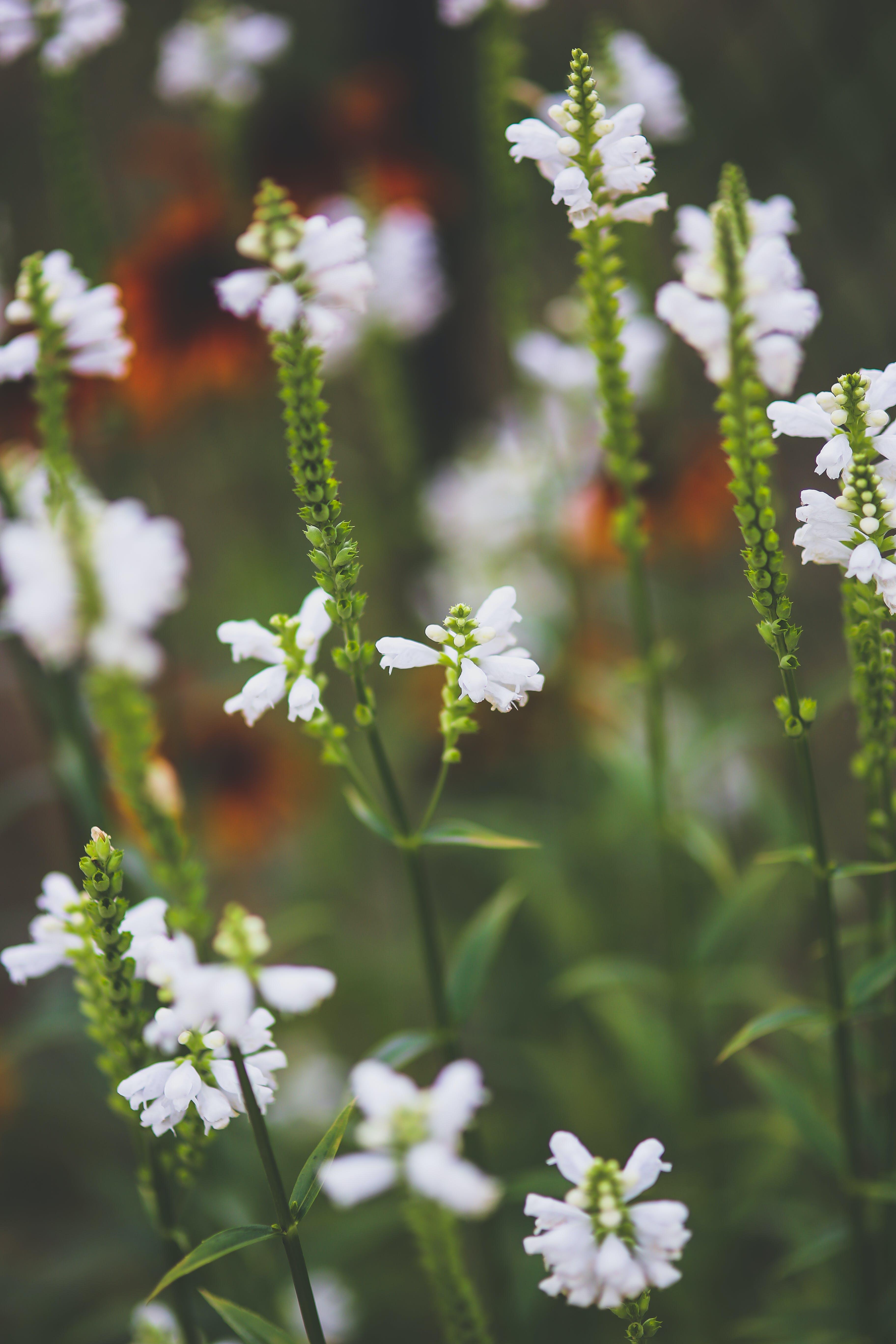 Základová fotografie zdarma na téma bílá, divoký, flóra, hřiště