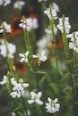 nature, flowers, summer