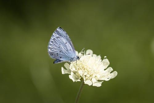 Adorable butterfly collecting pollen on flower