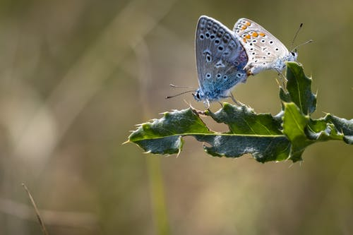 Butterflies on green leaf with thorns