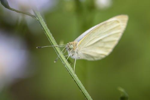 Butterfly sitting on green stalk