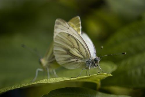 Butterflies sitting on green leaf