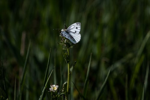 Small butterfly sitting on flower in nature