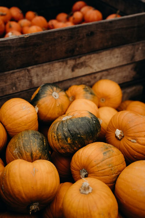 Orange and Green Pumpkins on Brown Wooden Table