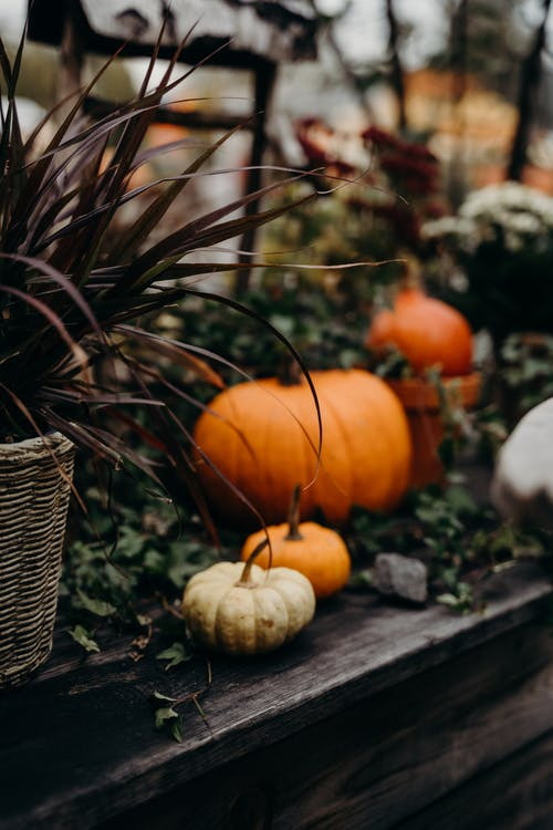 Orange Pumpkins on Brown Woven Basket