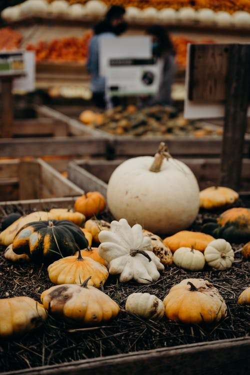 White and Yellow Pumpkin on Ground