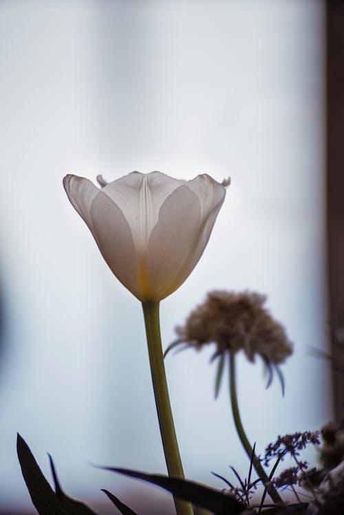 Základová fotografie zdarma na téma elegantní, flóra, jemný