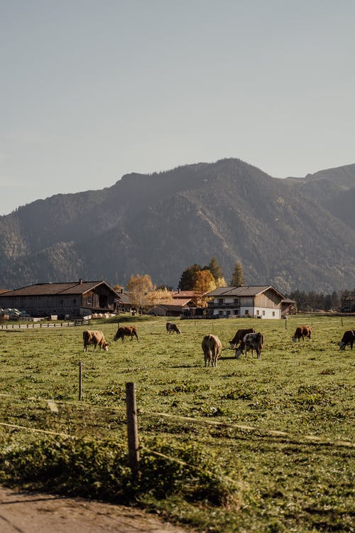 Horses on Green Grass Field Near Brown Wooden Houses