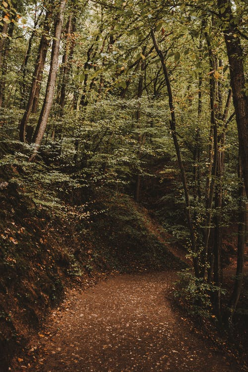 나무 사이 갈색 비포장 도로