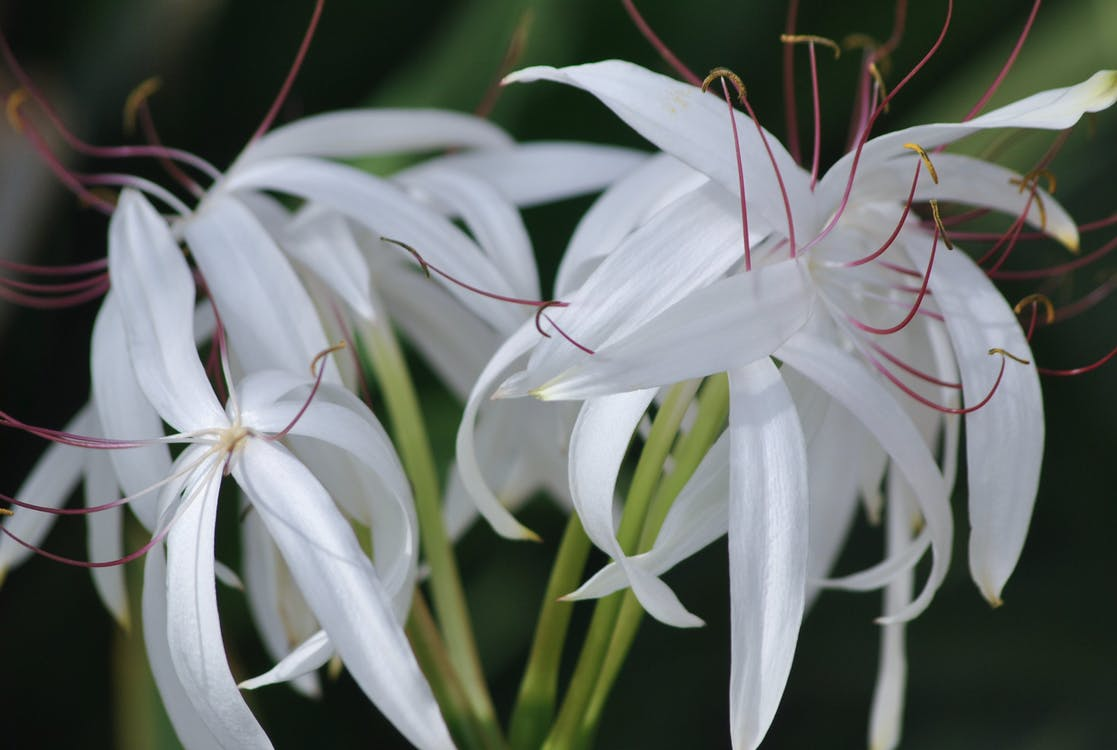 Free stock photo of beautiful flowers, flowers, natue