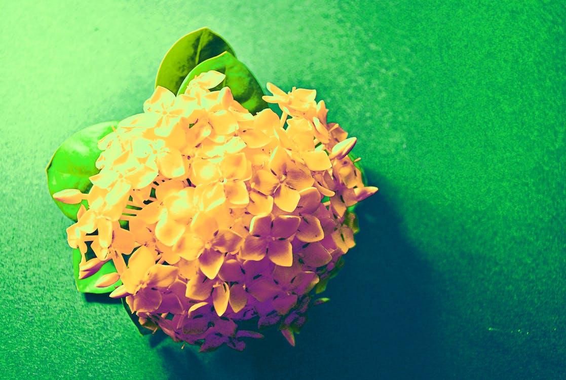 Free stock photo of flowers, macro photo