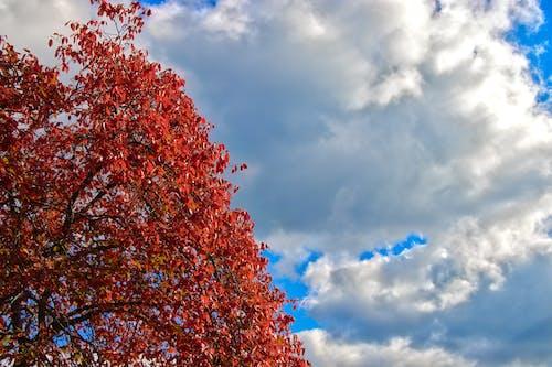 Kostenloses Stock Foto zu bäume, colorf, farbe, farben des herbstes