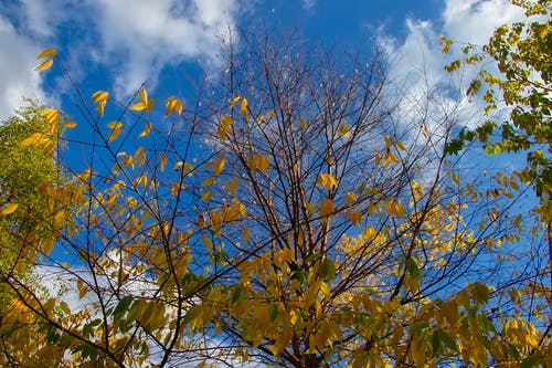 Kostenloses Stock Foto zu farbe, farben des herbstes, friedlich, himmel