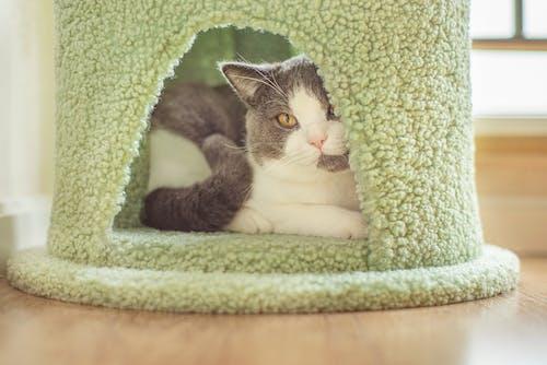 Základová fotografie zdarma na téma domácí, domácí mazlíček, kočka