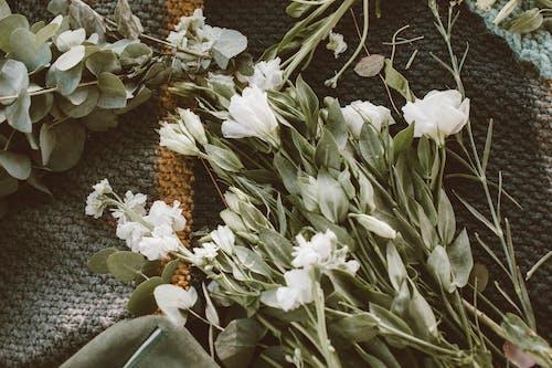 Безкоштовне стокове фото на тему «білий, букет, вродлива»