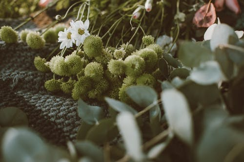 Безкоштовне стокове фото на тему «білий, зелений, квіти»