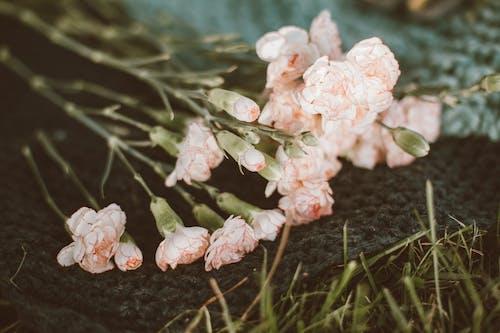 Безкоштовне стокове фото на тему «бутони, квіти, колір»