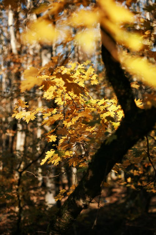 Trees with golden foliage in autumn forest