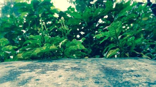 bahar, kaplıca, Kaya, yapraklar içeren Ücretsiz stok fotoğraf