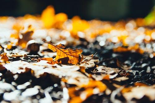 Gratis lagerfoto af close-up, efterårsblade, farver, fokus