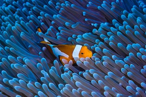 Безкоштовне стокове фото на тему «акваріум, апельсин, барвистий»