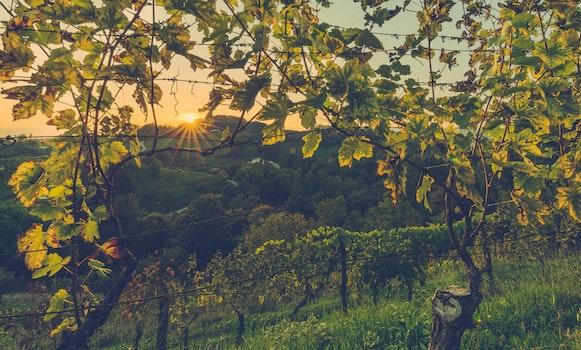 Free stock photo of landscape, nature, sunset, trees