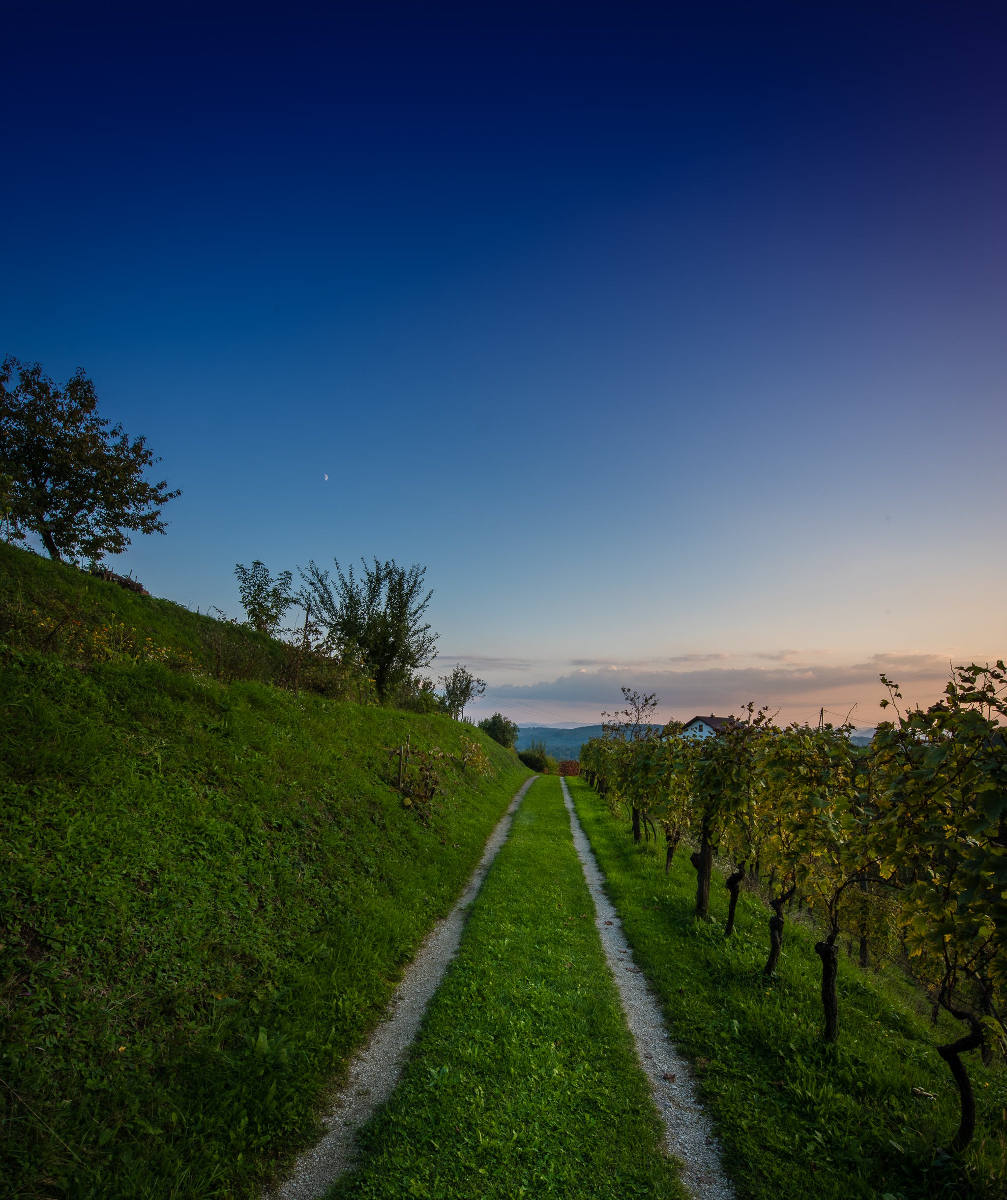 Free stock photo of blue, blue hour, blue sky, grapes