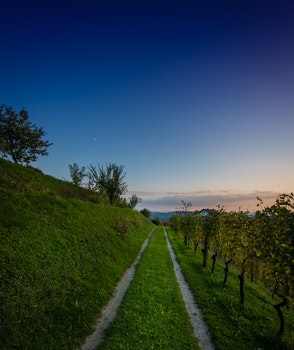 Free stock photo of road, sunset, blue, grapes