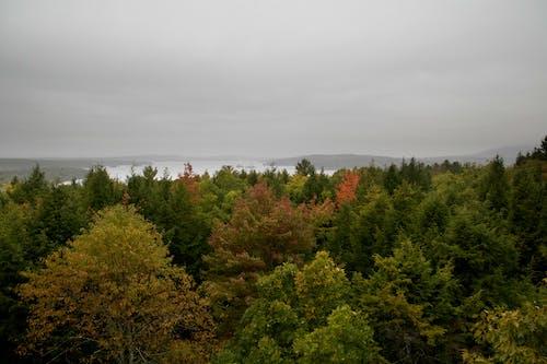 Безкоштовне стокове фото на тему «дерева, краєвид, ліс, небо»