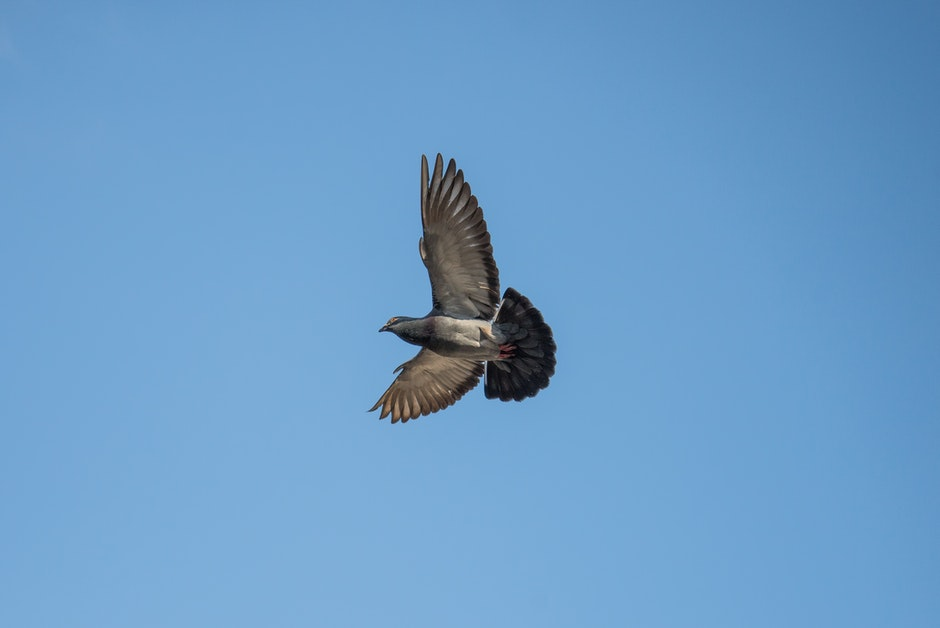 Gray and Black Bird Flying