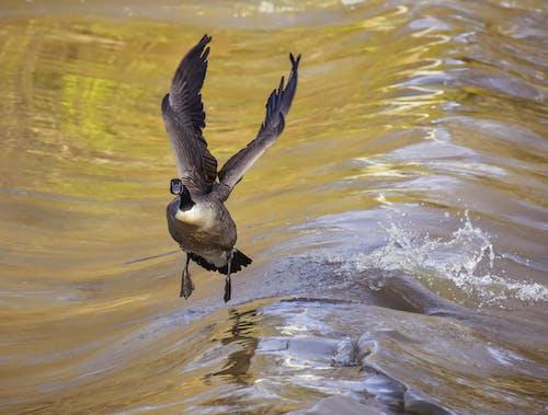 Δωρεάν στοκ φωτογραφιών με aqua, άγρια φύση, άγριος
