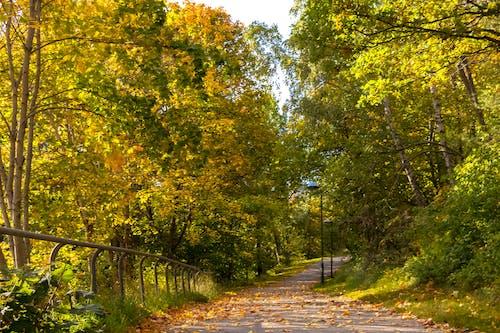 Kostenloses Stock Foto zu bäume, entspannung, farben des herbstes, gehen