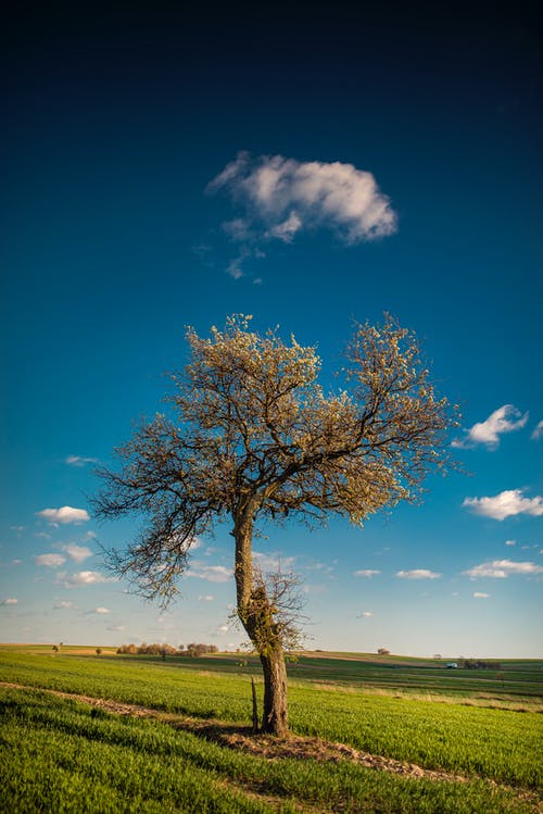 Landscape of tall tree growing on grassy green meadow under blue sky in summer sunny day