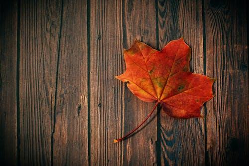 Maple Leaf on Brown Wooden Parquet Flooring