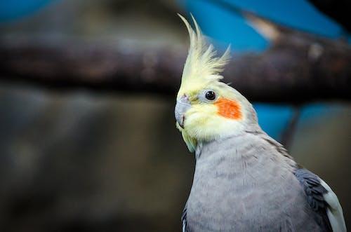 Ingyenes stockfotó boyd, galamb, madár témában