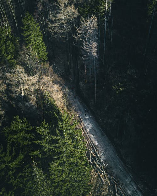 Black Train Rail in the Forest